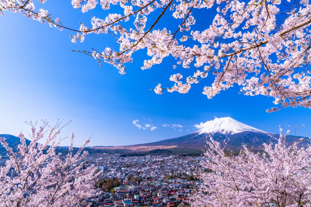 Mount Fuji and Cherry Blossom Trees
