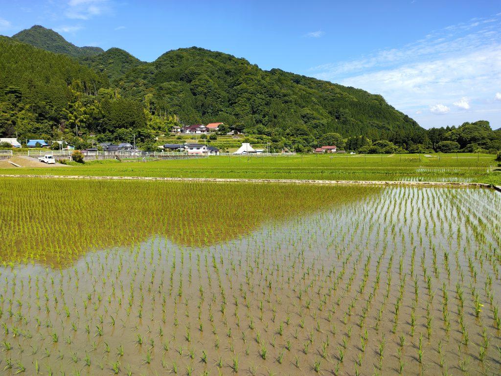 Bucolic scene in Japan's countryside
