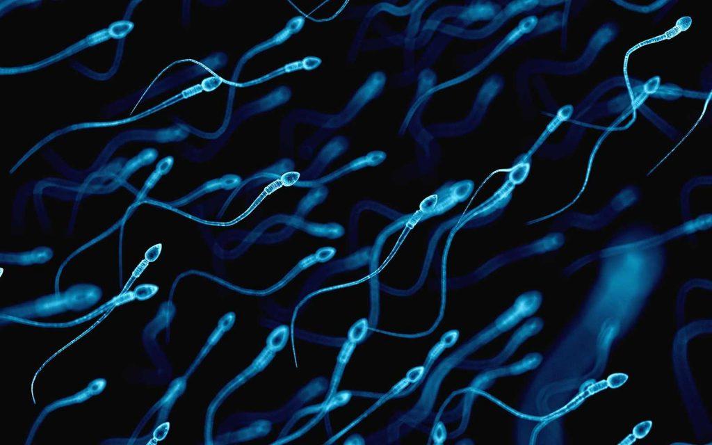 Sperm under the microscope
